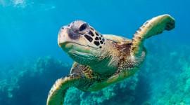 Sea Turtles Desktop Wallpaper For PC