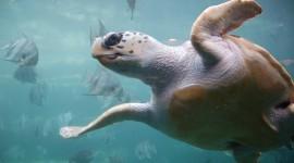 Sea Turtles Desktop Wallpaper Free