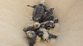 Sea Turtles High Quality Wallpaper