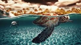 Sea Turtles Wallpaper Download Free