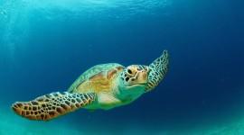Sea Turtles Wallpaper Gallery