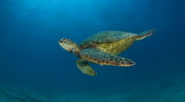 Sea Turtles Wallpaper HD
