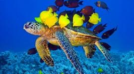 Sea Turtles Wallpaper HQ