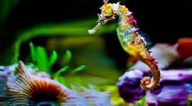 Seahorse Best Wallpaper