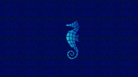 Seahorse Wallpaper Background