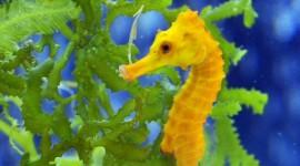 Seahorse Wallpaper For Desktop