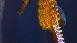 Seahorse Wallpaper For IPhone Download