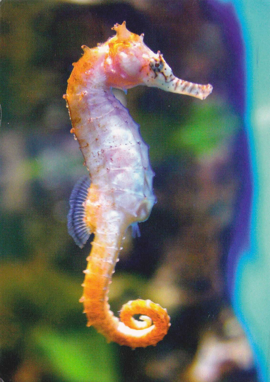 seahorse wallpapers high quality download free