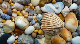 Shells Wallpaper Download
