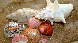 Shells Wallpaper Gallery