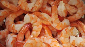 Shrimp Wallpaper Free