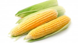 Sweet Corn Wallpaper For Desktop