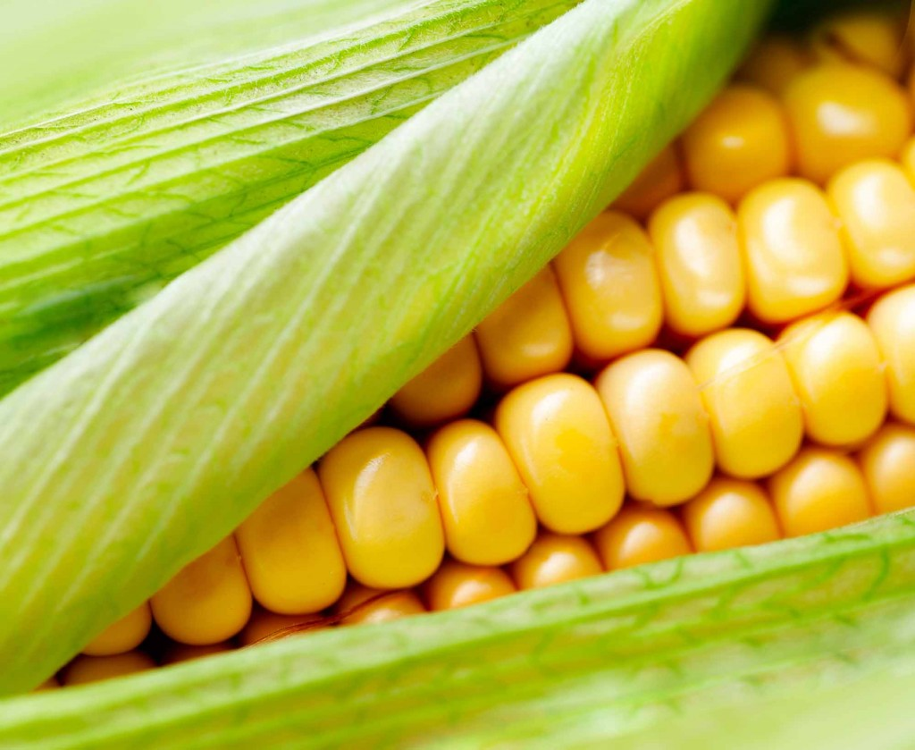 Sweet Corn wallpapers HD