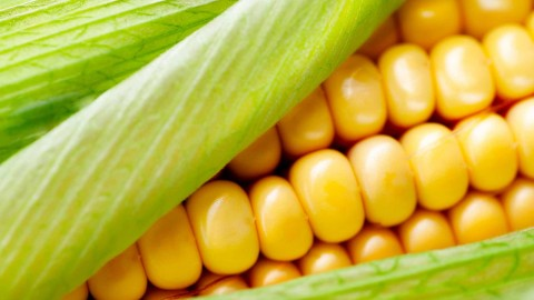 Sweet Corn wallpapers high quality