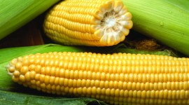 Sweet Corn Wallpaper Free