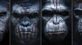 War For The Planet Of The Apes Wallpaper Widescreen