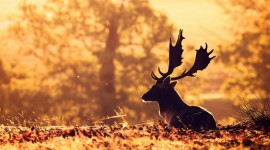 4K Deer Best Wallpaper
