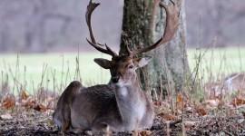 4K Deer Photo Free