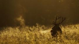 4K Deer Photo#2
