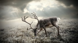 4K Deer Photo#3