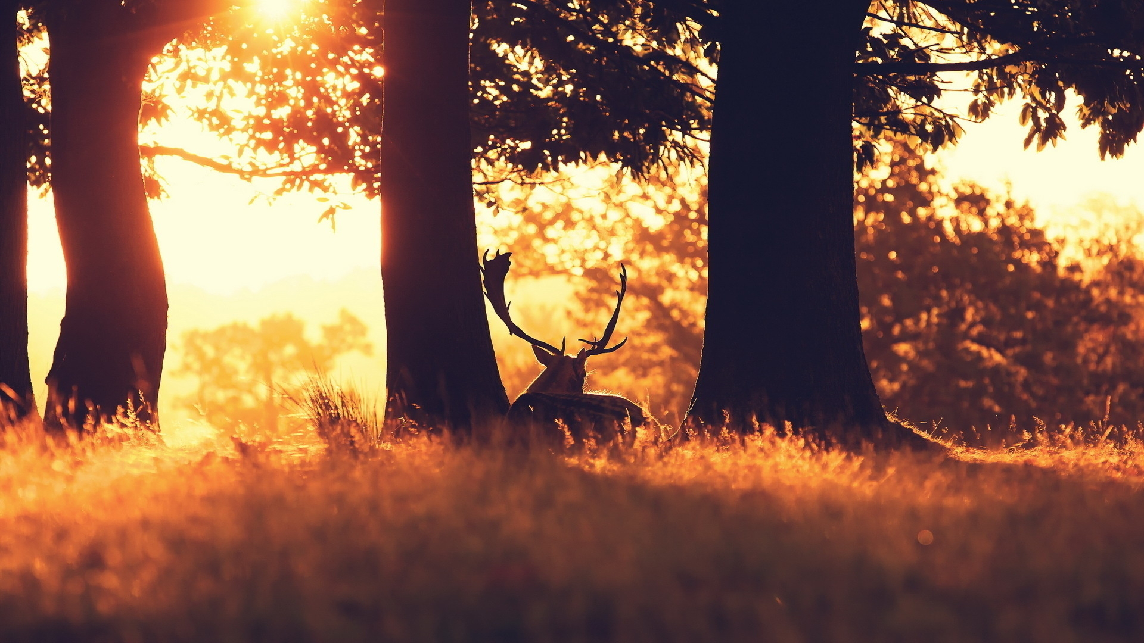 4k Wallpaper: 4K Deer Wallpapers High Quality