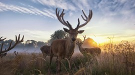 4K Deer Wallpaper Gallery