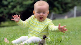 4K Duck Photo Download