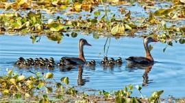 4K Duck Pics