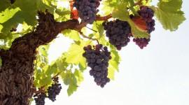 4K Grapes Desktop Wallpaper