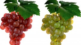 4K Grapes Photo Free#2