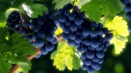 4K Grapes Photo#3