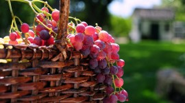 4K Grapes Wallpaper