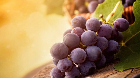 4K Grapes wallpapers high quality