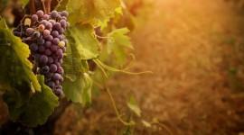 4K Grapes Wallpaper#1