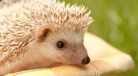 4K Hedgehogs Wallpaper Gallery