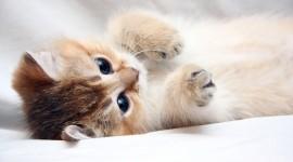 4K Kittens Best Wallpaper