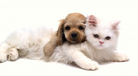 4K Kittens Desktop Wallpaper