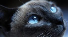 4K Kittens Desktop Wallpaper HD