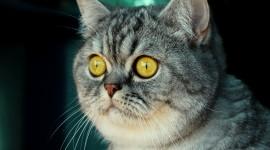 4K Kittens Photo