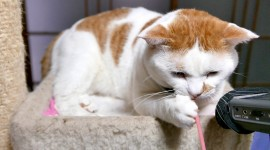 4K Kittens Photo Download