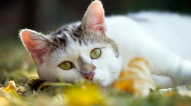 4K Kittens Photo Free