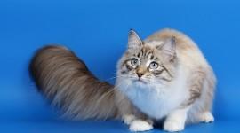 4K Kittens Photo#1