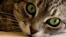 4K Kittens Photo#2