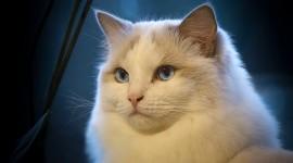 4K Kittens Photo#4