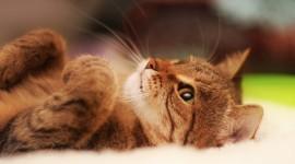 4K Kittens Wallpaper 1080p