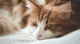 4K Kittens Wallpaper