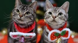 4K Kittens Wallpaper Download