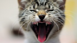 4K Kittens Wallpaper Download Free