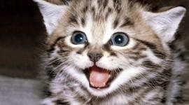 4K Kittens Wallpaper For Desktop