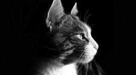 4K Kittens Wallpaper For PC#1
